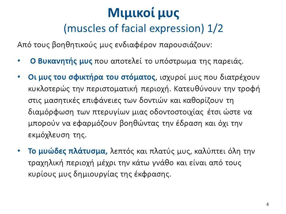 Μιμικοί μυς (muscles of facial expression) 1/2 Από τους βοηθητικούς μυς ενδιαφέρον παρουσιάζουν: Ο Βυκανητής μυς που αποτελεί το υπόστρωμα της παρειάς.