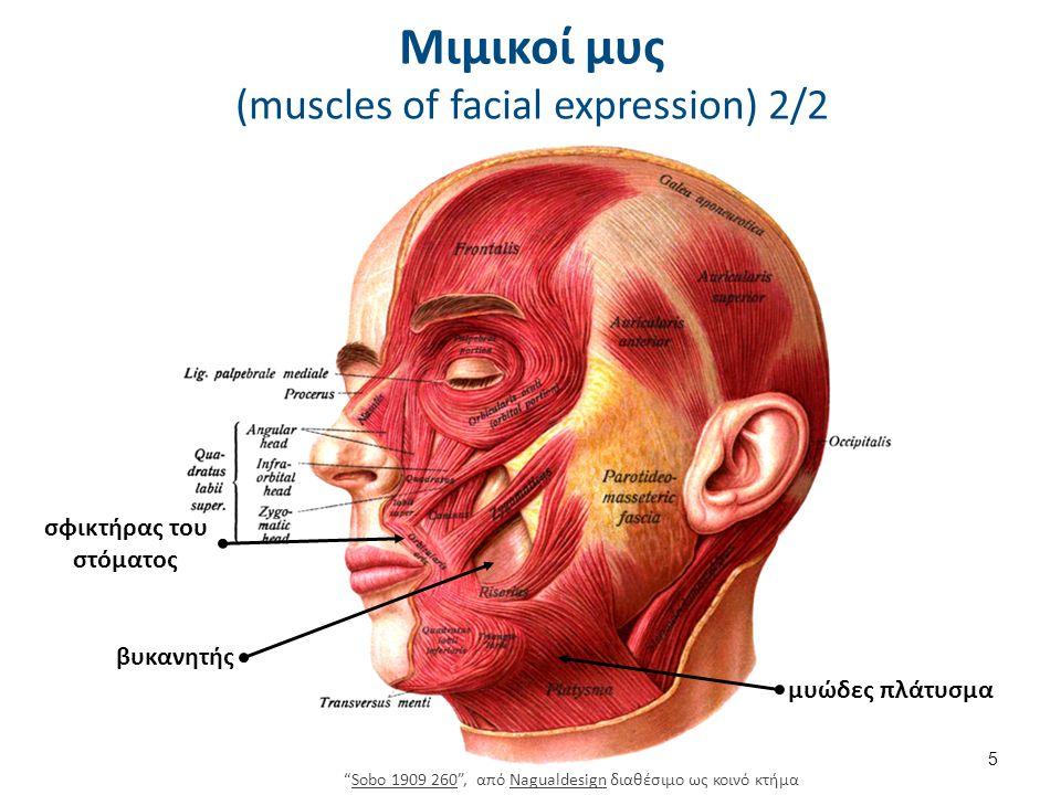 Μυς στοματογναθικού συστήματος 2/3 6 Κύριοι Μασητήριοι.