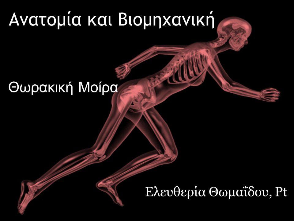 dsfsf Ανατομία και Βιομηχανική Ελευθερία Θωμαΐδου, Pt Θωρακική Μοίρα