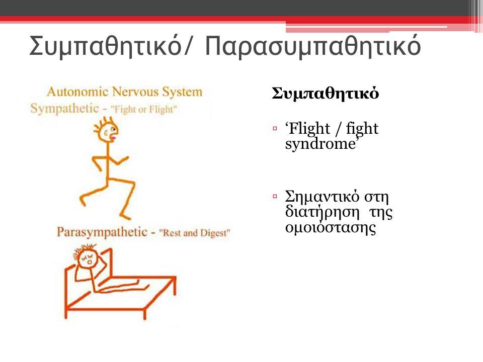 Συμπαθητικό/ Παρασυμπαθητικό Συμπαθητικό ▫'Flight / fight syndrome' ▫Σημαντικό στη διατήρηση της ομοιόστασης