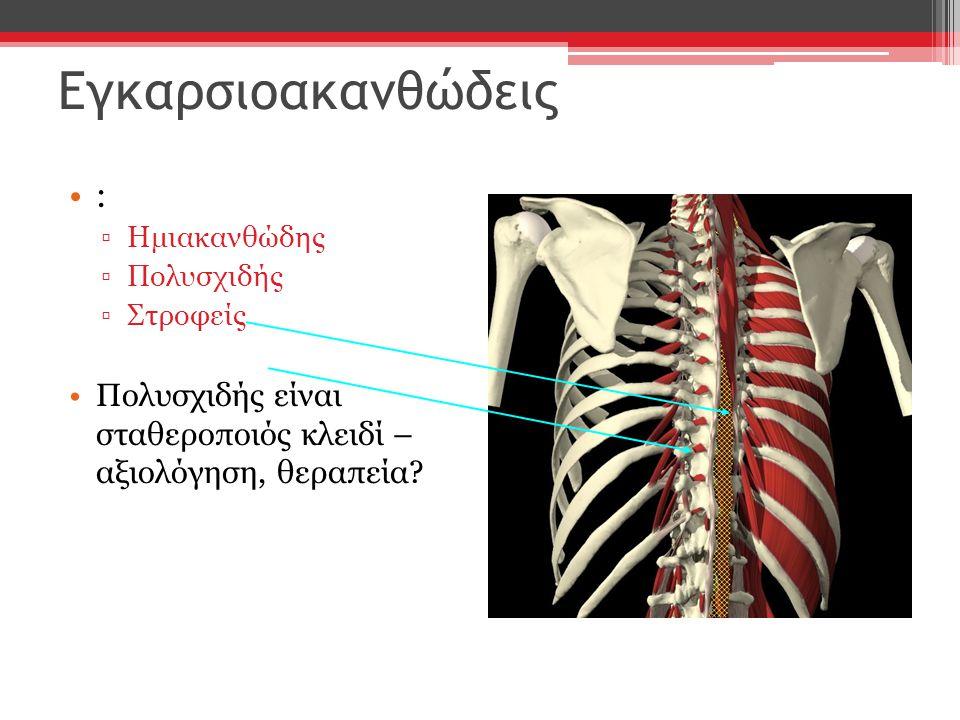 : ▫Ημιακανθώδης ▫Πολυσχιδής ▫Στροφείς Πολυσχιδής είναι σταθεροποιός κλειδί – αξιολόγηση, θεραπεία? Εγκαρσιοακανθώδεις