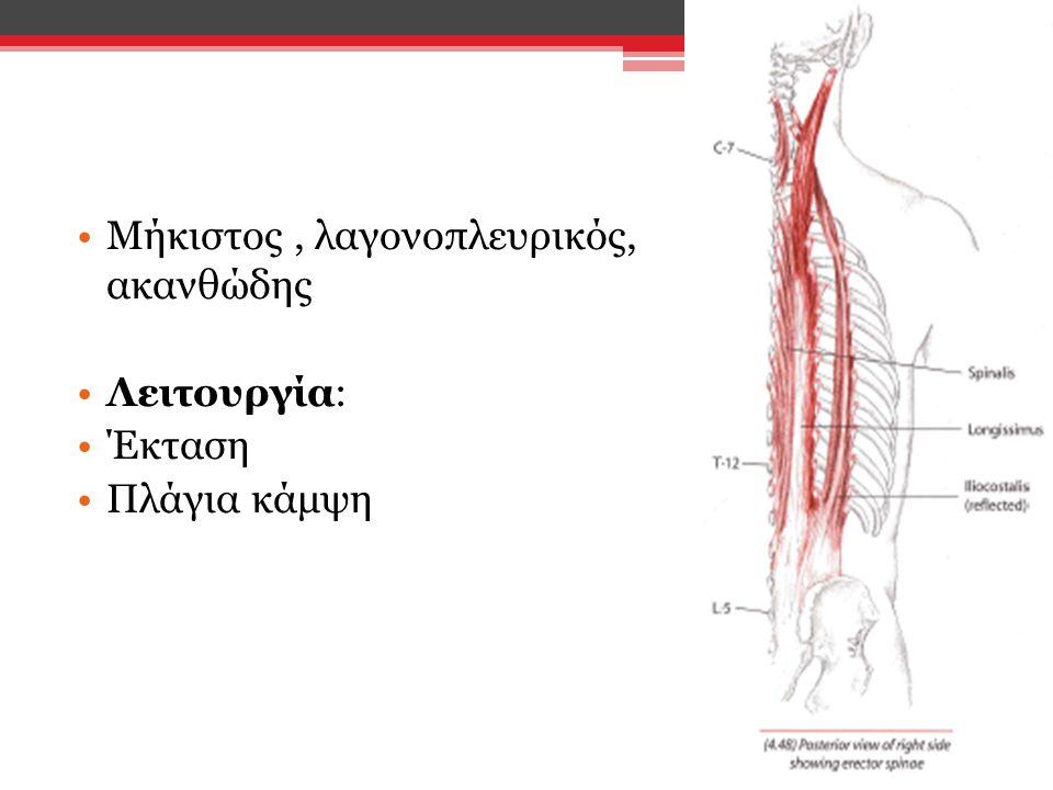 Μήκιστος, λαγονοπλευρικός, ακανθώδης Λειτουργία: Έκταση Πλάγια κάμψη