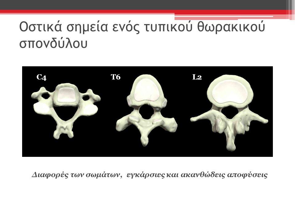 Αρθρώσεις Πλευροσπονδυλικές Άρθρωση των σπονδύλων με την κεφαλή της πλευράς Πλευρεγκάρσιες αρθρώσεις( φύμα- εγκάρσια αποφυση) Στερνοπλευρικές Μεσοχόνδρινες Άρθρωση λαβής- στέρνο, στερνο- ξιφοειδής απόφυση