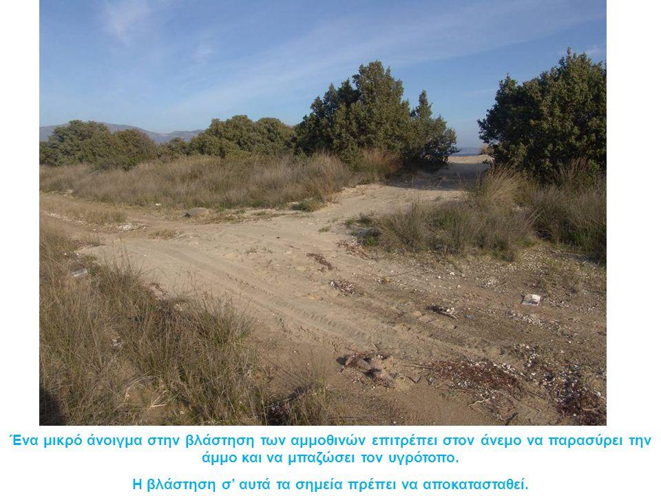 Ένα μικρό άνοιγμα στην βλάστηση των αμμοθινών επιτρέπει στον άνεμο να παρασύρει την άμμο και να μπαζώσει τον υγρότοπο.