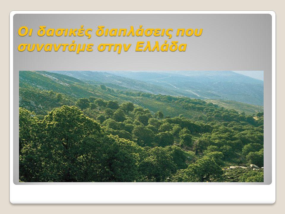 Οι δασικές διαπλάσεις που συναντάμε στην Ελλάδα
