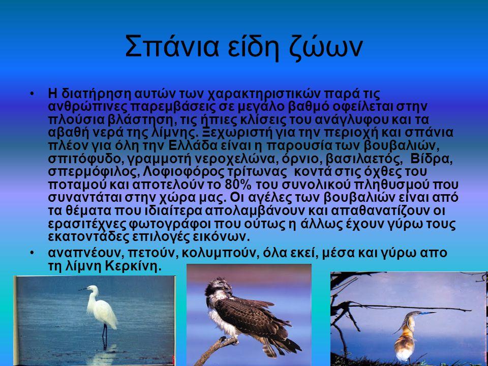 Σπάνια είδη ζώων Η διατήρηση αυτών των χαρακτηριστικών παρά τις ανθρώπινες παρεμβάσεις σε μεγάλο βαθμό οφείλεται στην πλούσια βλάστηση, τις ήπιες κλίσ