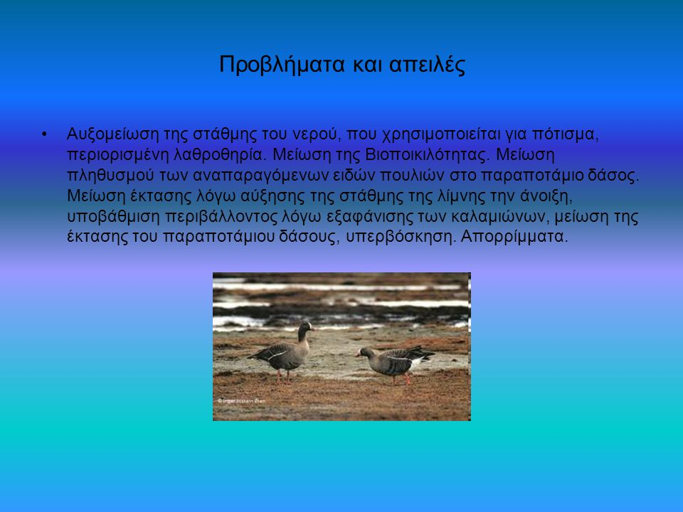 Προβλήματα και απειλές Αυξομείωση της στάθμης του νερού, που χρησιμοποιείται για πότισμα, περιορισμένη λαθροθηρία. Μείωση της Βιοποικιλότητας. Μείωση