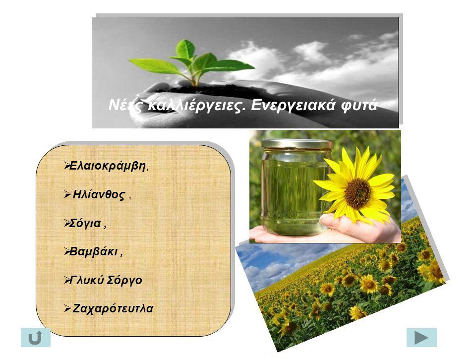 Νέες καλλιέργειες. Ενεργειακά φυτά  Ελαιοκράμβη,  Ηλίανθος,  Σόγια,  Βαμβάκι,  Γλυκύ Σόργο  Ζαχαρότευτλα