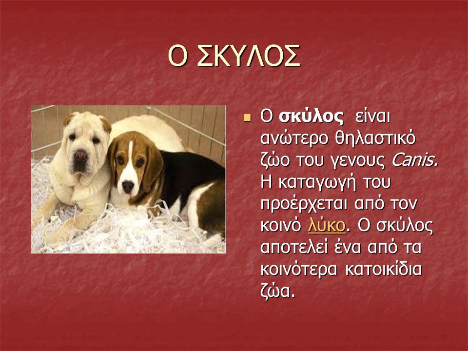 Ο ΣΚΥΛΟΣ O σκύλος είναι ανώτερο θηλαστικό ζώο του γενους Canis.