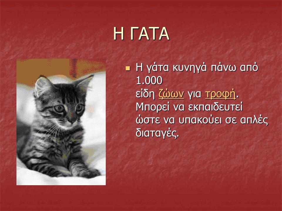 Η ΓΑΤΑ Η γάτα κυνηγά πάνω από 1.000 είδη ζώων για τροφή.