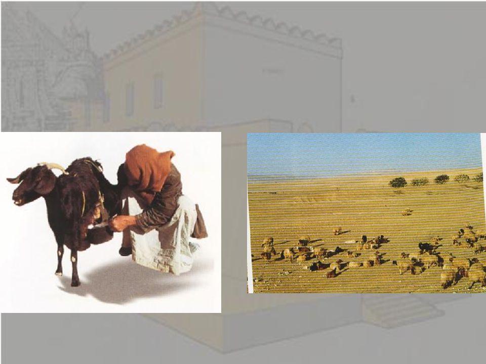 Τι αλλάζει; Στη Χαναάν υπάρχει ένας μεγάλος κοσμοπολίτικος πολιτισμός επηρεασμένος από τον πολιτισμό της Αιγύπτου, της Μεσοποταμίας, της Κρήτης, του Αιγαίου, της Κύπρου.