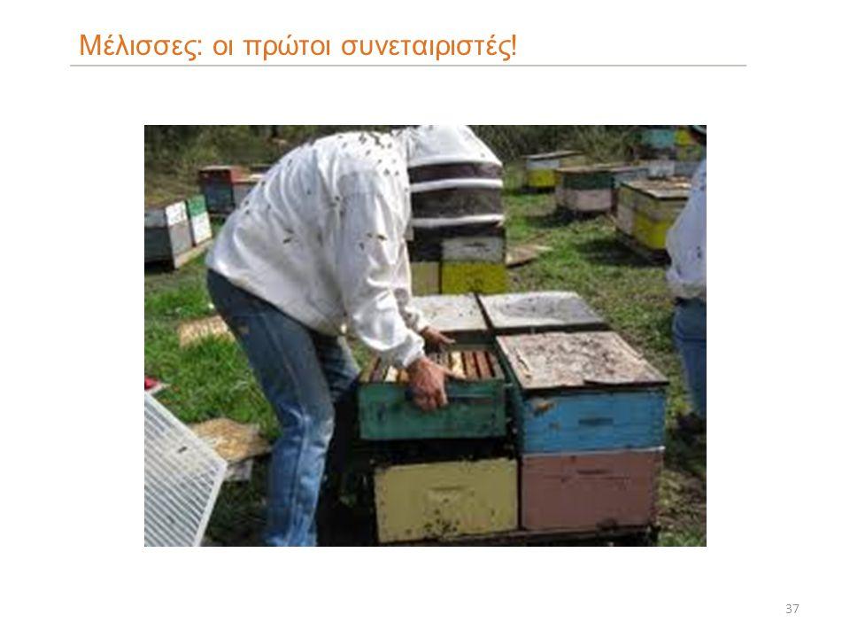 37 Μέλισσες: οι πρώτοι συνεταιριστές!