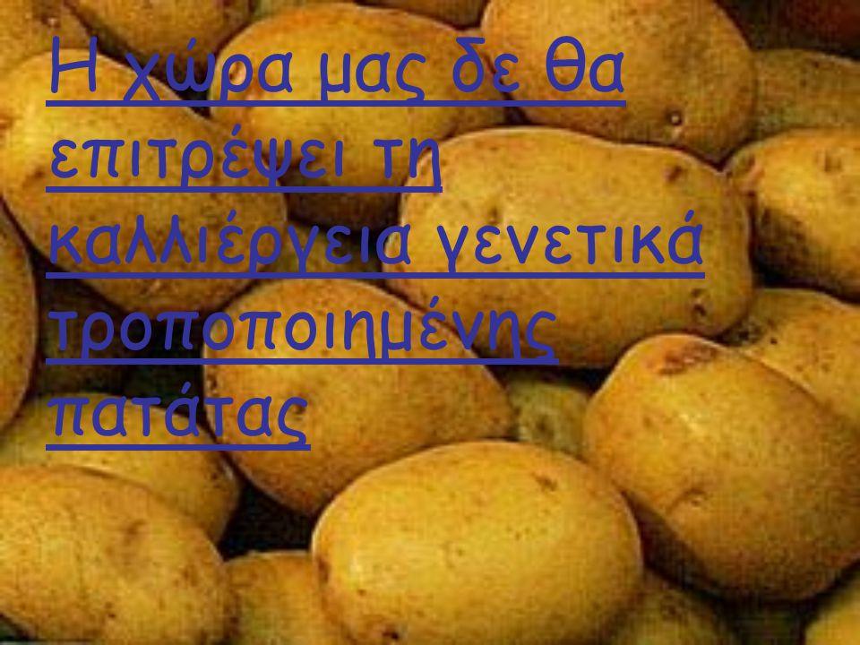 Η χώρα μας δε θα επιτρέψει τη καλλιέργεια γενετικά τροποποιημένης πατάτας