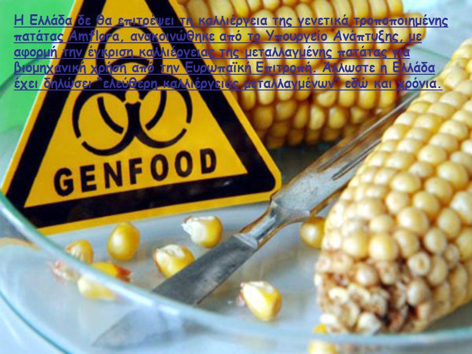 Η Ελλάδα δε θα επιτρέψει τη καλλιέργεια της γενετικά τροποποιημένης πατάτας Amflora, ανακοινώθηκε από το Υπουργείο Ανάπτυξης, με αφορμή την έγκριση καλλιέργειας της μεταλλαγμένης πατάτας για βιομηχανική χρήση από την Ευρωπαϊκή Επιτροπή.