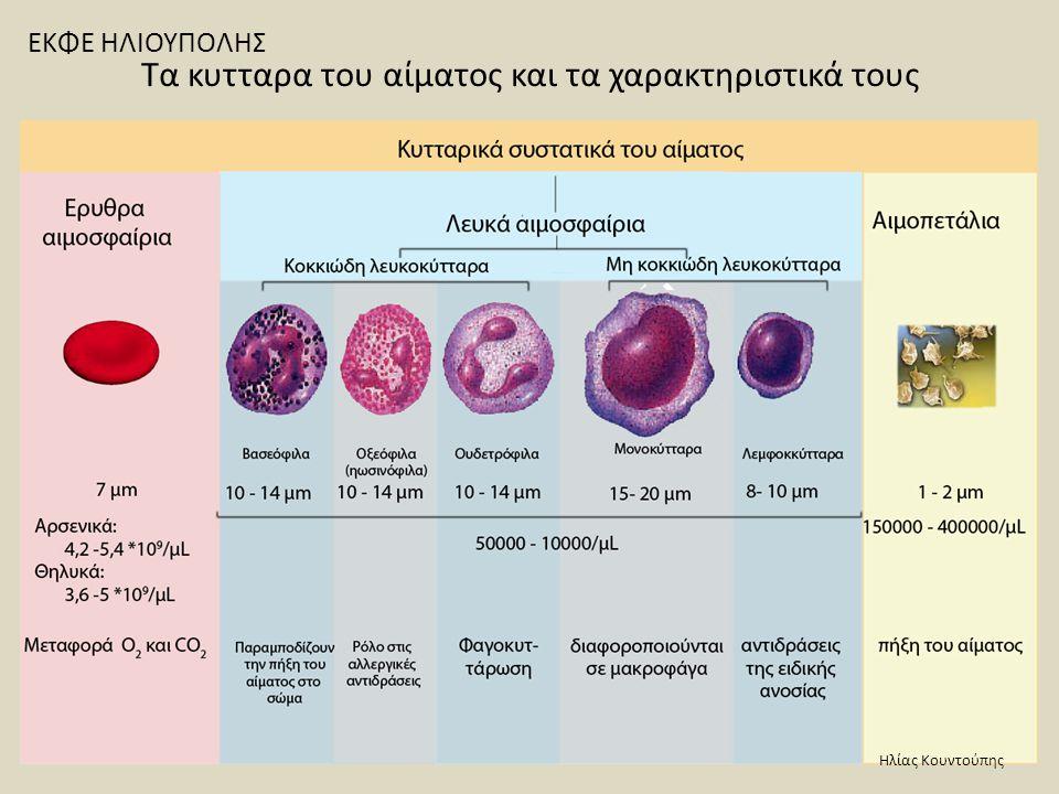 Σχηματική απόδοση της αιμοποίησης και των σειρών των κυττάρων του αίματος Ερυθρή σειρά Λευκή ακοκκιώδης σειρά Λευκή κοκκιώδης σειράΛευκή ακοκκιώδης σειρά Θρομβοκυτταρική σειρά Ηλίας Κουντούπης