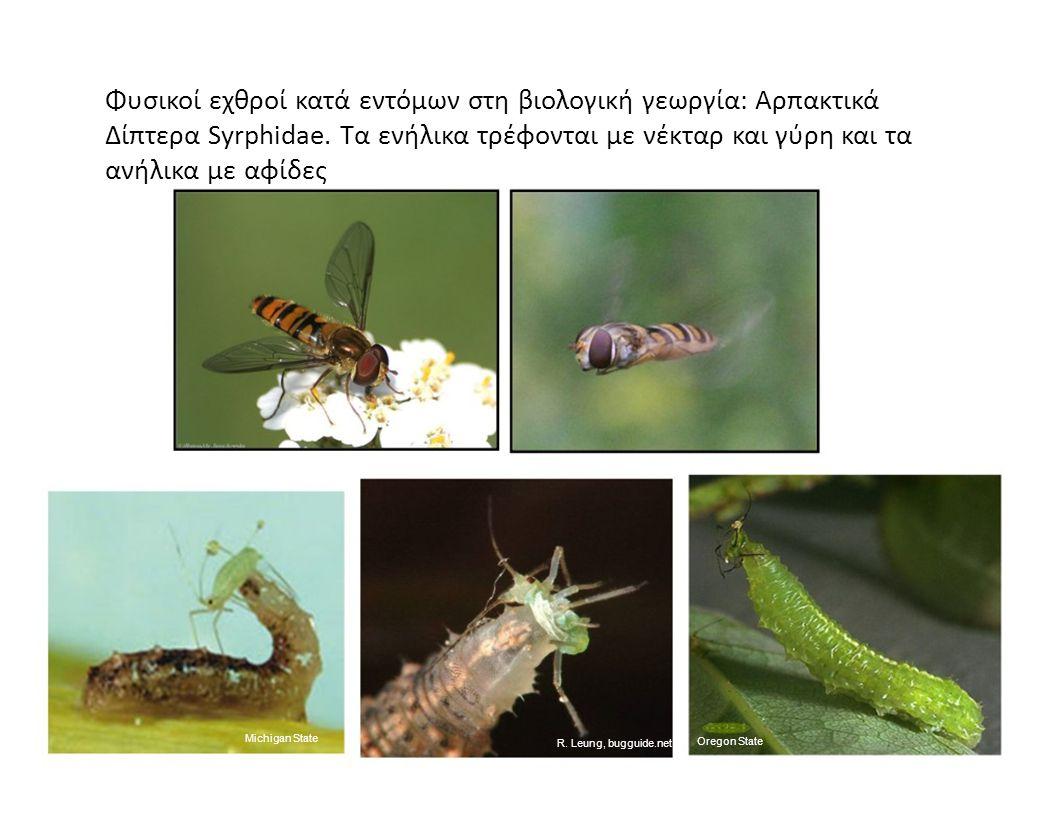 Φυσικοί εχθροί κατά εντόμων στη βιολογική γεωργία: Αρπακτικά Δίπτερα Syrphidae. Τα ενήλικα τρέφονται με νέκταρ και γύρη και τα ανήλικα με αφίδες Michi