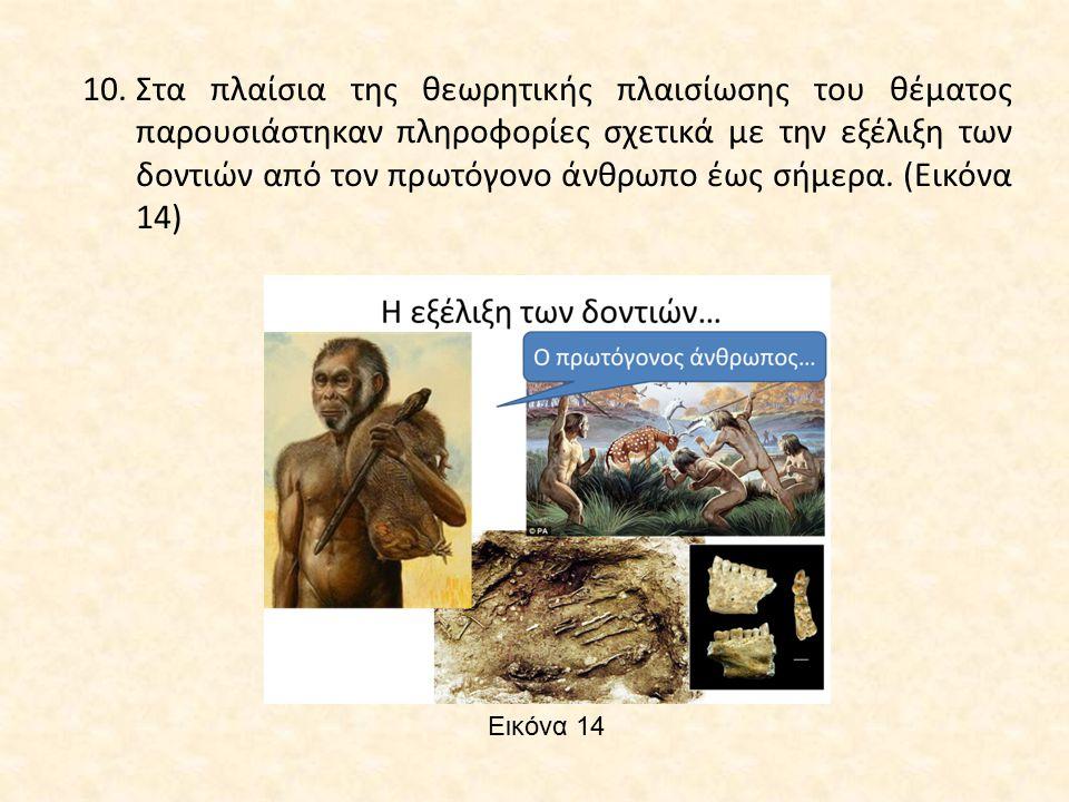 Εικόνα 14 10.Στα πλαίσια της θεωρητικής πλαισίωσης του θέματος παρουσιάστηκαν πληροφορίες σχετικά με την εξέλιξη των δοντιών από τον πρωτόγονο άνθρωπο