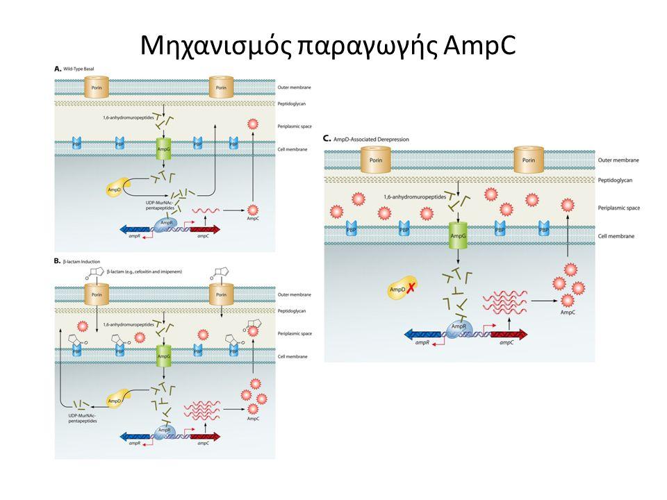AmpC β-λακταμάσες (group-1 κατά Bush et al) Χρωμοσωματικές και επαγώγιμες – C.