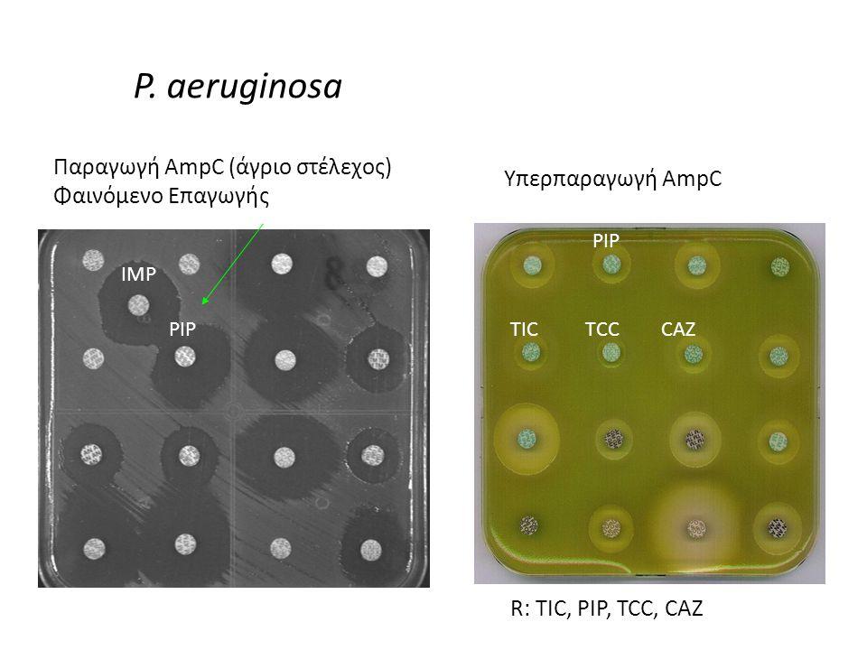 Υπερπαραγωγή AmpC R: TIC, PIP, TCC, CAZ PIP TICTCCCAZ P.