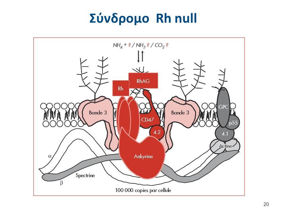 Σύνδρομο Rh null 20