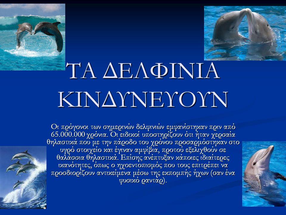 ΤΑ ΔΕΛΦΙΝΙΑ ΚΙΝΔΥΝΕΥΟΥΝ Οι πρόγονοι των σημερινών δελφινιών εμφανίστηκαν πριν από 65.000.000 χρόνια.