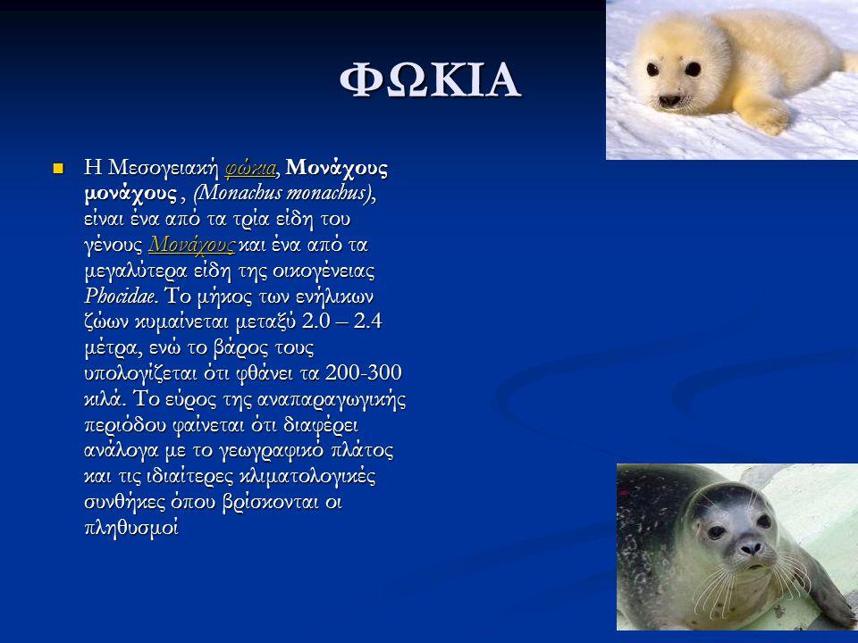ΦΩΚΙΑ Η Μεσογειακή φώκια, Μονάχους μονάχους, (Monachus monachus), είναι ένα από τα τρία είδη του γένους Μονάχους και ένα από τα μεγαλύτερα είδη της οικογένειας Phocidae.
