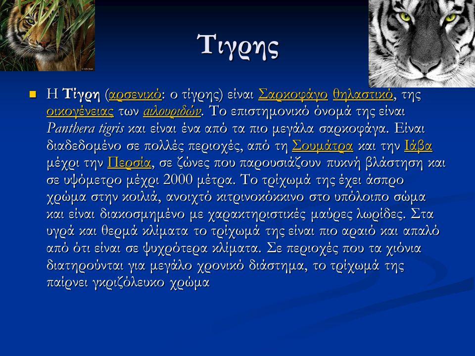 Τιγρης Η Τίγρη (αρσενικό: ο τίγρης) είναι Σαρκοφάγο θηλαστικό, της οικογένειας των αιλουριδών.
