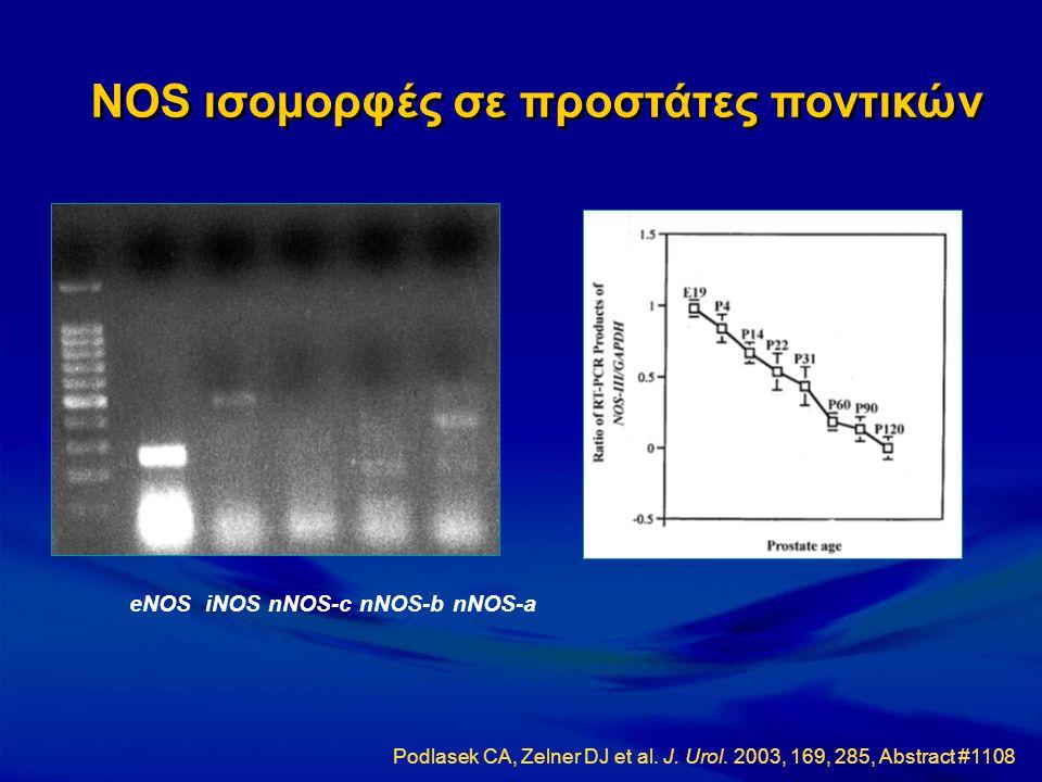 eNOS iNOS nNOS-c nNOS-b nNOS-a NOS ισομορφές σε προστάτες ποντικών Podlasek CA, Zelner DJ et al. J. Urol. 2003, 169, 285, Abstract #1108