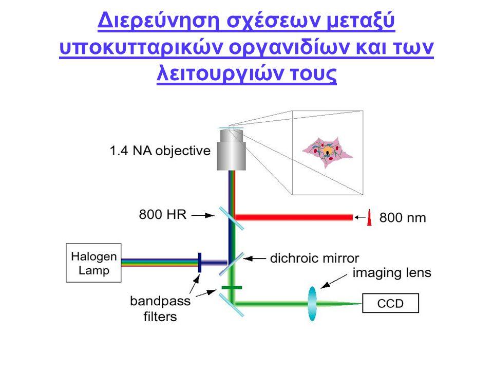 Διερεύνηση σχέσεων μεταξύ υποκυτταρικών οργανιδίων και των λειτουργιών τους
