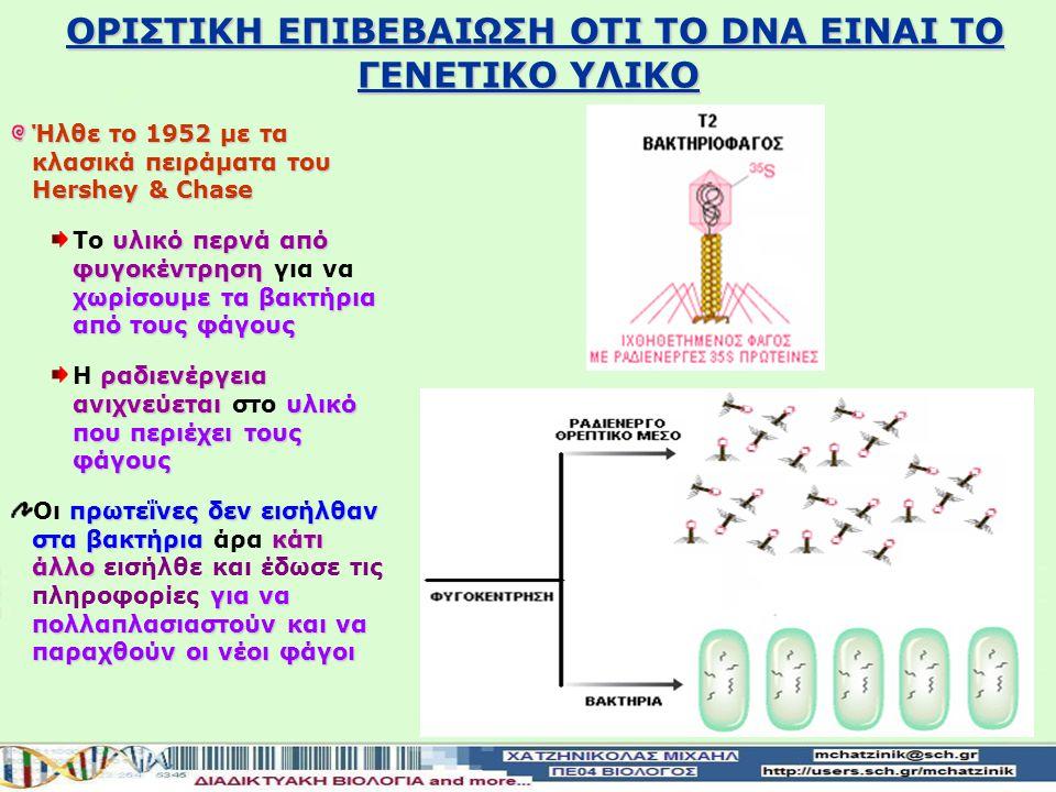 OΡΙΣΤΙΚΗ ΕΠΙΒΕΒΑΙΩΣΗ ΟΤΙ ΤΟ DΝΑ ΕΙΝΑΙ ΤΟ ΓΕΝΕΤΙΚΟ ΥΛΙΚΟ Ήλθε το 1952 με τα κλασικά πειράματα του Hershey & Chase Μελέτησαν τον κύκλο ζωής του βακτηριο