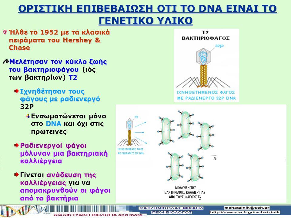 Ήλθε το 1952 με τα κλασικά πειράματα του Hershey & Chase Μελέτησαν τον κύκλο ζωής του βακτηριοφάγου Τ2 Μελέτησαν τον κύκλο ζωής του βακτηριοφάγου (ιός των βακτηρίων) Τ2 Ιχνηθέτησαν τους φάγους με ραδιενεργό Ιχνηθέτησαν τους φάγους με ραδιενεργό 32P DΝΑ Ενσωματώνεται μόνο στo DΝΑ και όχι στις πρωτεινες Ραδιενεργοί φάγοι μόλυναν μια βακτηριακή καλλιέργεια ανάδευση της καλλιέργειας απομακρυνθούν οι φάγοι από τα βακτήρια Γίνεται ανάδευση της καλλιέργειας για να απομακρυνθούν οι φάγοι από τα βακτήρια OΡΙΣΤΙΚΗ ΕΠΙΒΕΒΑΙΩΣΗ ΟΤΙ ΤΟ DΝΑ ΕΙΝΑΙ ΤΟ ΓΕΝΕΤΙΚΟ ΥΛΙΚΟ