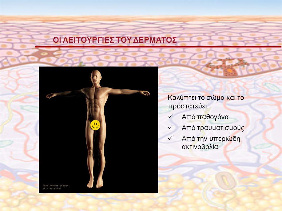ΟΙ ΛΕΙΤΟΥΡΓΙΕΣ ΤΟΥ ΔΕΡΜΑΤΟΣ Καλύπτει το σώμα και το προστατεύει: Από παθογόνα Από τραυματισμούς Από την υπεριώδη ακτινοβολία
