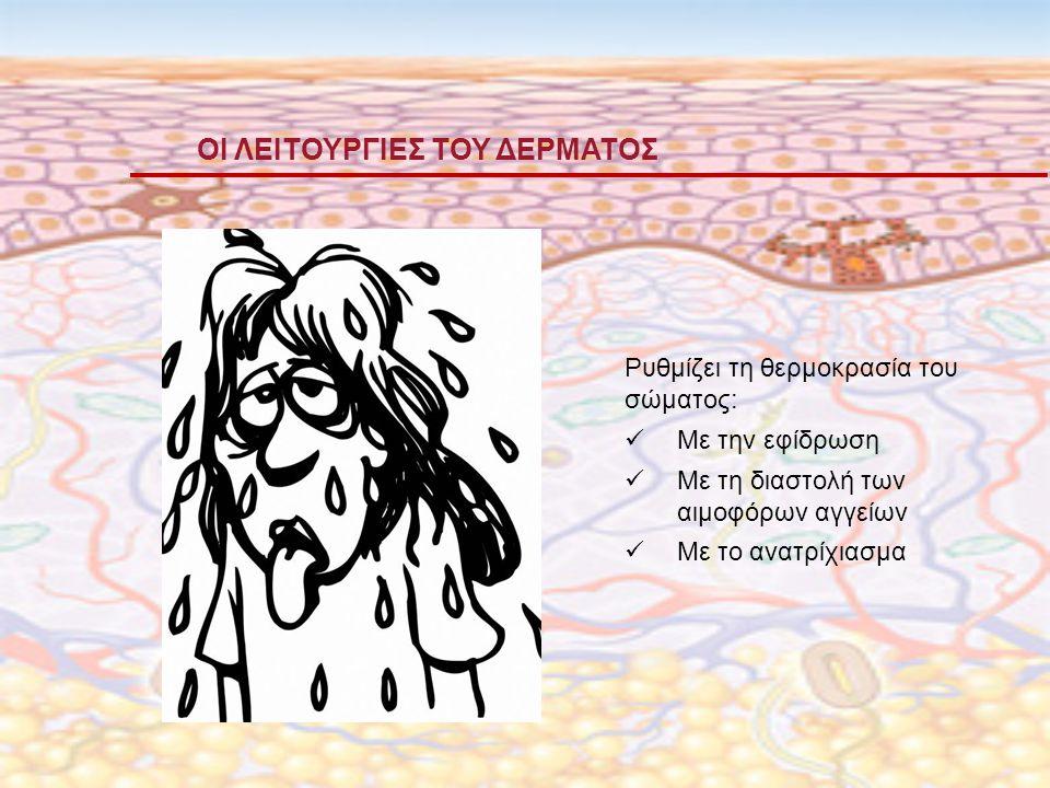 ΟΙ ΛΕΙΤΟΥΡΓΙΕΣ ΤΟΥ ΔΕΡΜΑΤΟΣ Ρυθμίζει τη θερμοκρασία του σώματος: Με την εφίδρωση Με τη διαστολή των αιμοφόρων αγγείων Με το ανατρίχιασμα