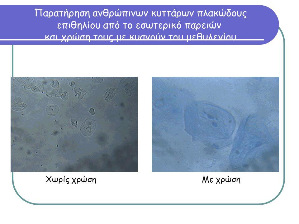 Παρατήρηση ανθρώπινων κυττάρων πλακώδους επιθηλίου από το εσωτερικό παρειών και χρώση τους με κυανούν του μεθυλενίου Χωρίς χρώση Με χρώση