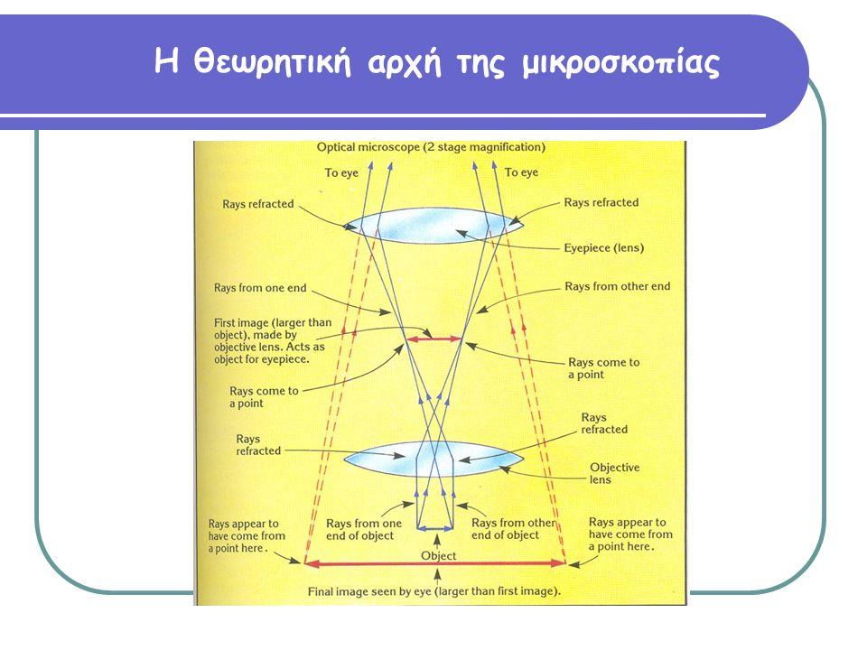 Παρατήρηση κυττάρων αίματος όπου διακρίνονται τα ερυθρά και τα λευκά αιμοσφαίρια (έτοιμο παρασκ.) Λεμφοκύτταρο