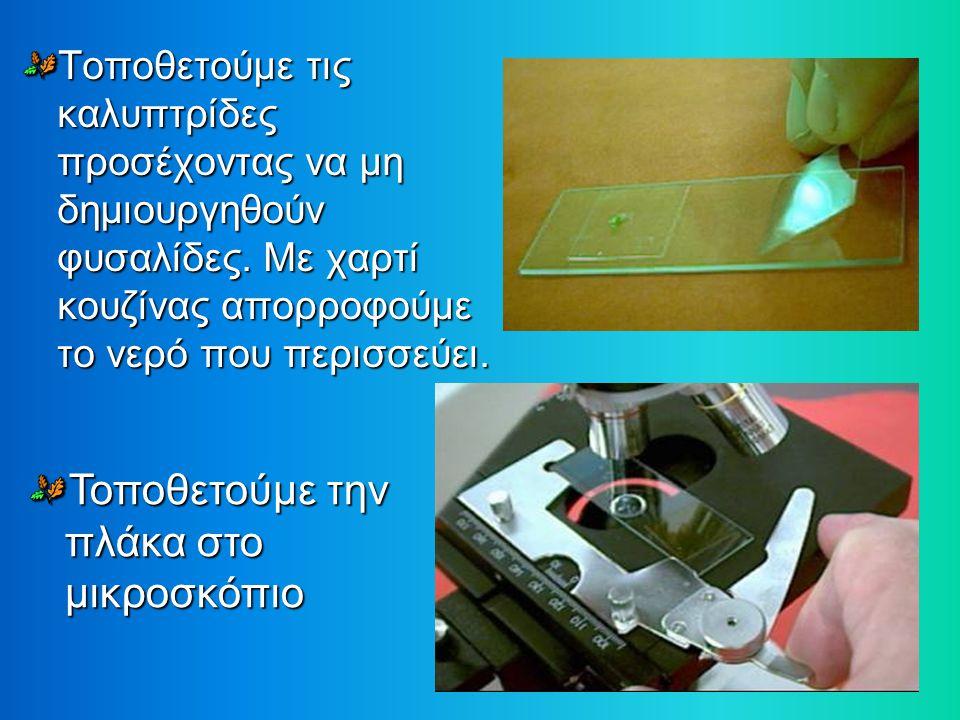 Φύλλο στο οποίο διακρίνονται στόματα και τριχίδια καταφρακτικά κύτταρα στόματα Πυρήνες