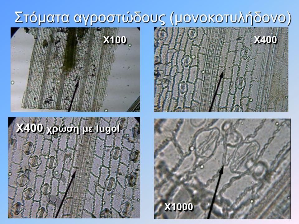 Στόματα από φωτογραφία ηλεκτρονικού μικροσκοπίου