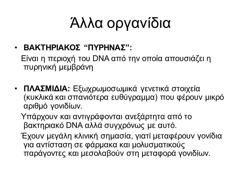 """Άλλα οργανίδια ΒΑΚΤΗΡΙΑΚΟΣ """"ΠΥΡΗΝΑΣ"""": Είναι η περιοχή του DNA από την οποία απουσιάζει η πυρηνική μεμβράνη ΠΛΑΣΜΙΔΙΑ: Εξωχρωμοσωμικά γενετικά στοιχεία"""