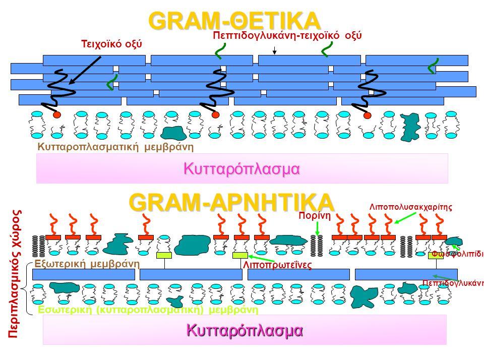 GRAM-ΘΕΤΙΚΑ GRAM-ΑΡΝΗΤΙΚΑ Κυτταρόπλασμα Κυτταρόπλασμα Τειχοϊκό οξύ Πεπτιδογλυκάνη-τειχοϊκό οξύ Κυτταροπλασματική μεμβράνη Εσωτερική (κυτταροπλασματική