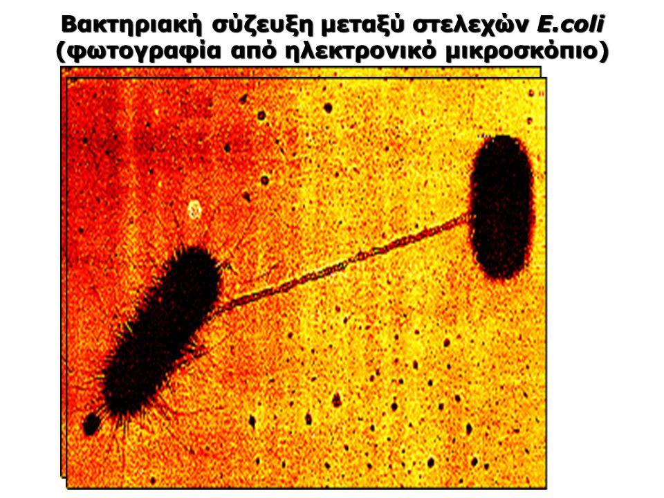 Βακτηριακή σύζευξη μεταξύ στελεχών E.coli (φωτογραφία από ηλεκτρονικό μικροσκόπιο)