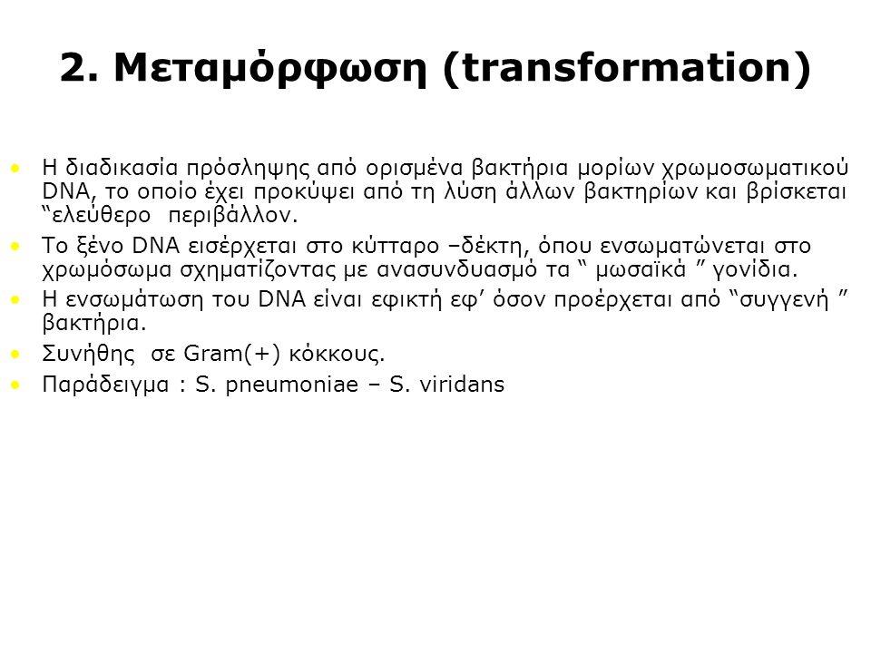 2. Μεταμόρφωση (transformation) Η διαδικασία πρόσληψης από ορισμένα βακτήρια μορίων χρωμοσωματικού DNA, το οποίο έχει προκύψει από τη λύση άλλων βακτη