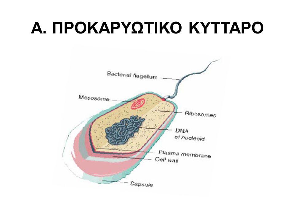 –Βλεφαρίδες : Χρησιμοποιούνται για κίνηση –Φιμπριες : Χρησιμοποιούνται για προσκόλληση-σύζευξη Γλυκοκάλυκας - Έλυτρο: Χρησιμοποιείται για προσκόλληση, προστασία.