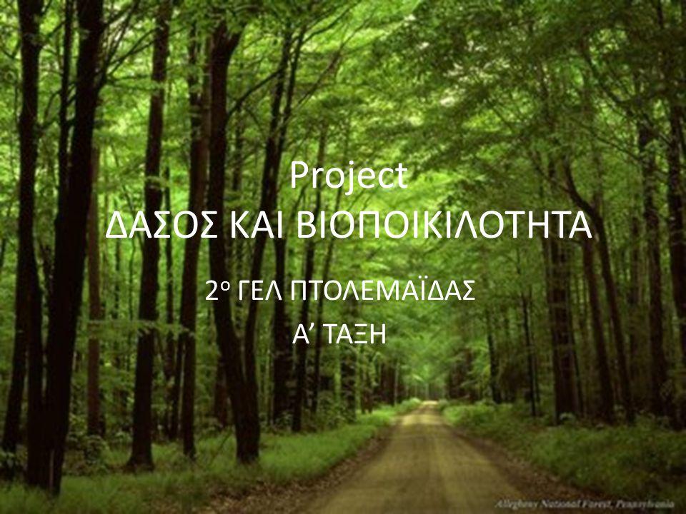 ΖΩΑ Υπάρχουν πολλά ζώα που κατοικούν στα δάση της χώρα μας.