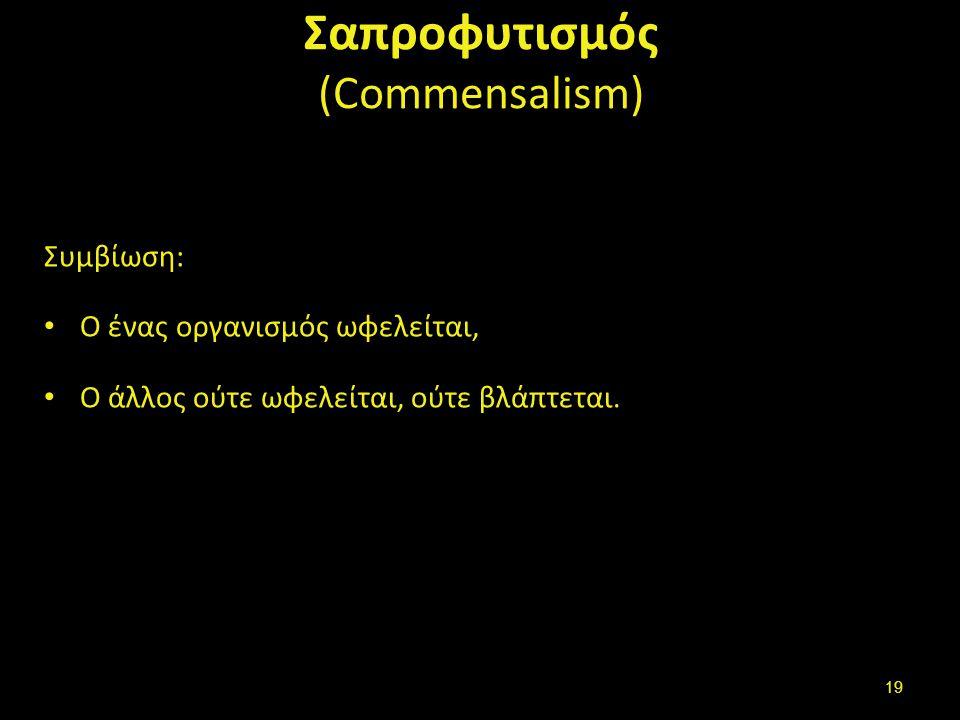 Σαπροφυτισμός (Commensalism) Συμβίωση: Ο ένας οργανισμός ωφελείται, Ο άλλος ούτε ωφελείται, ούτε βλάπτεται.