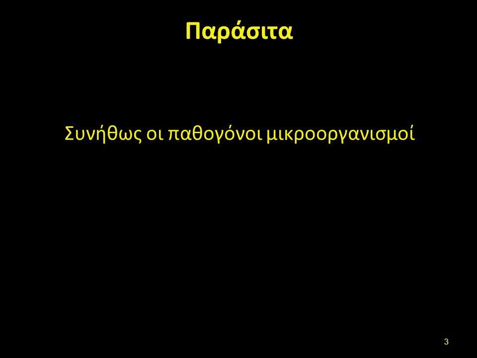 Εντερικά Παράσιτα Ταινία Taenia solium , από Citron διαθέσιμο ως κοινό κτήμαTaenia soliumCitron Αμοιβάδα Wikipedy.com 14