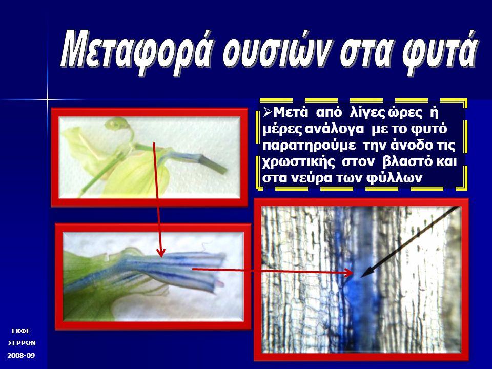 ΕΚΦΕ ΣΕΡΡΩΝ 2008-09ΕΚΦΕ ΣΕΡΡΩΝ 2008-09 Δακτυλιόγλυπτο Αγγείο ή τραχεία Ξύλωμα πράσου σε διαμήκη τομή από μικροσκόπιο σκοτεινού πεδίου Σαμαράς Πασχάλης
