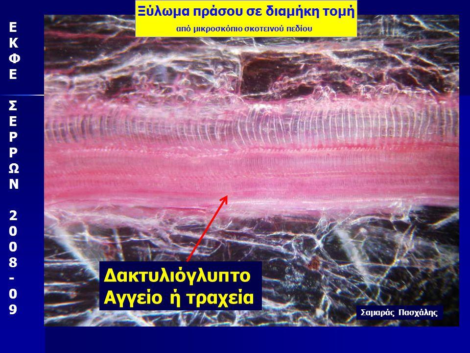 ΕΚΦΕ ΣΕΡΡΩΝ 2008-09 πράσο Αγωγός ιστός με κόκκινη χρωστική τροφίμων