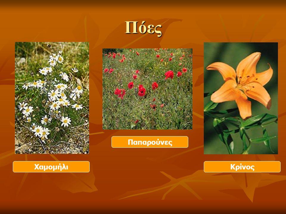 Χαρακτηριστικά των φυτών Μεγαλύτερη διάρκεια ζωής Μεγαλύτερη διάρκεια ζωής Μεσαίο μέγεθος Μεσαίο μέγεθος Σκληρός και κοντός βλαστός Σκληρός και κοντός βλαστός (αμπέλι, θυμάρι, πικροδάφνη …) ΘΑΜΝΟΙ
