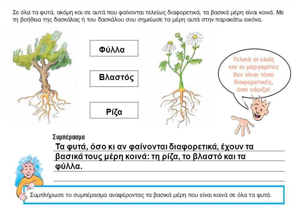 Φύλλα Βλαστός Ρίζα Τα φυτά, όσο κι αν φαίνονται διαφορετικά, έχουν τα βασικά τους μέρη κοινά: τη ρίζα, το βλαστό και τα φύλλα.