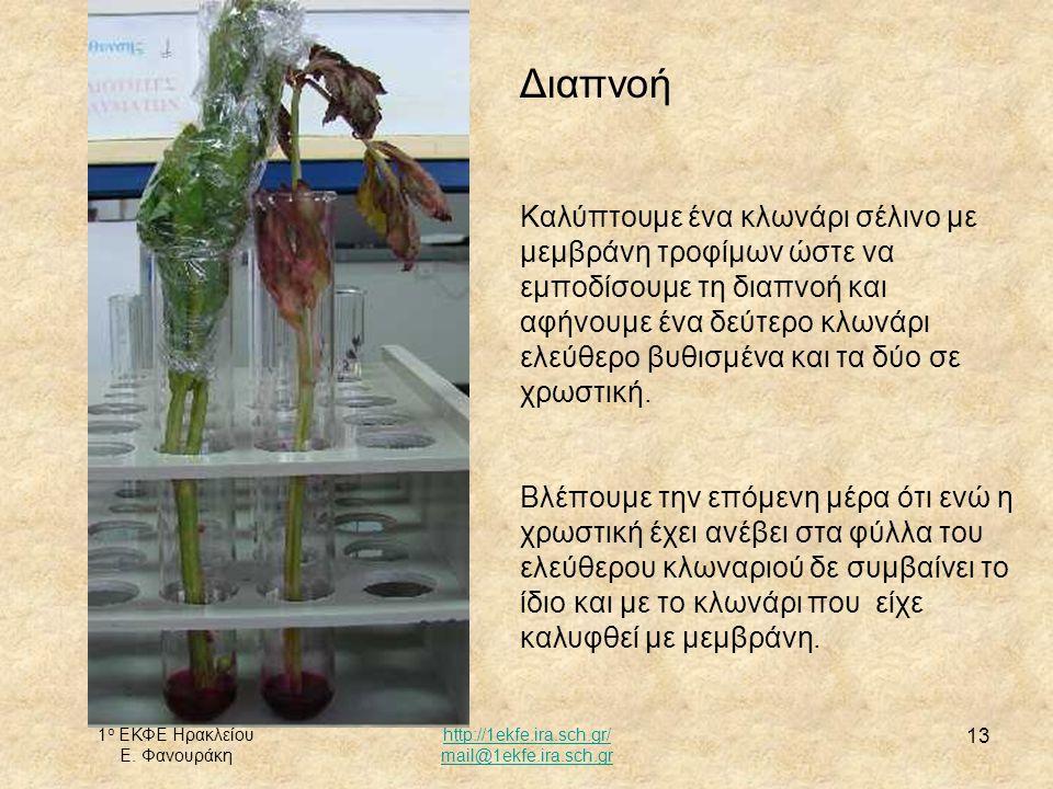 1 ο ΕΚΦΕ Ηρακλείου Ε. Φανουράκη http://1ekfe.ira.sch.gr/ mail@1ekfe.ira.sch.gr 13 Διαπνοή Καλύπτουμε ένα κλωνάρι σέλινο με μεμβράνη τροφίμων ώστε να ε